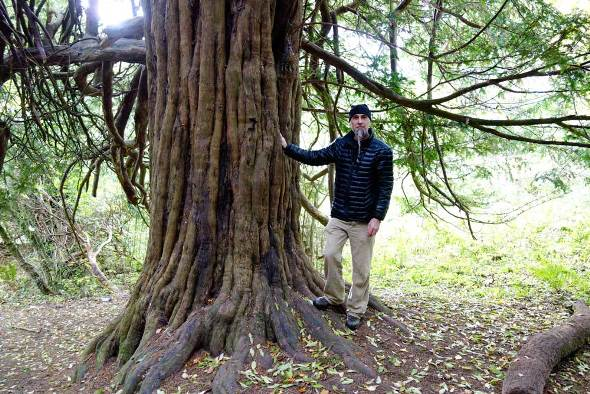 Michael Dunning yew tree
